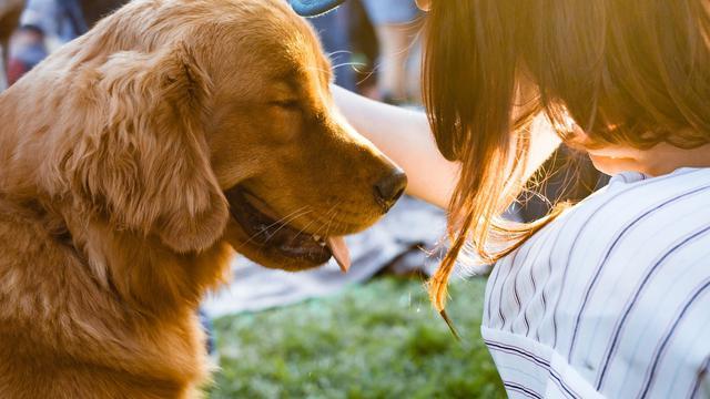 Memiliki Anjing Peliharaan Menjadi Sarana Mencari Teman Baru